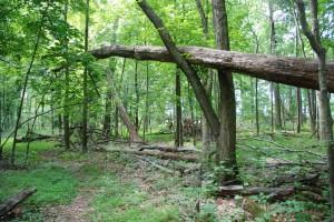 Hutcheson Memorial Forest jun2007 200dpi D B Botkin CSC_0041 (81)