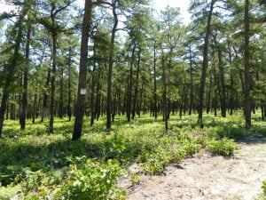 Pine Barrens B Williams tour 20jun2013