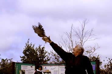 Releasing Hawk
